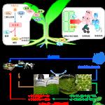 遠山_研究図